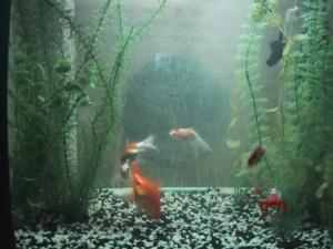 Fishies (3)