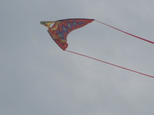 sitori6 Pterodacyl kite side