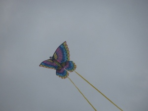 sitori6 Butterfly kite